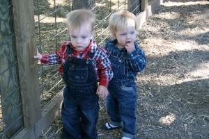 Babies staring at goats